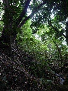 Au royaume des Hobbits rps20130217_200954-225x300