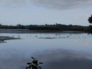 Dans le Northland,  un delta... rps20130223_194642_3411-300x225